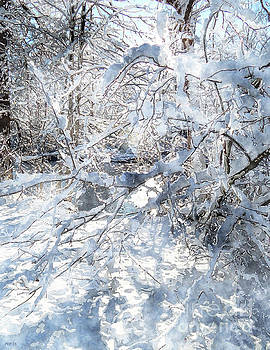 Snow Covered Trees by Phil Perkins