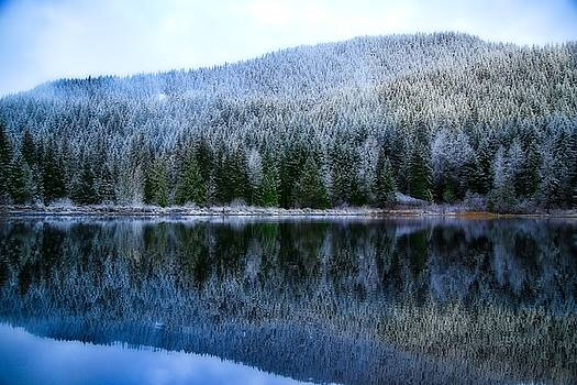 Snow covered trees reflections by Lynn Hopwood