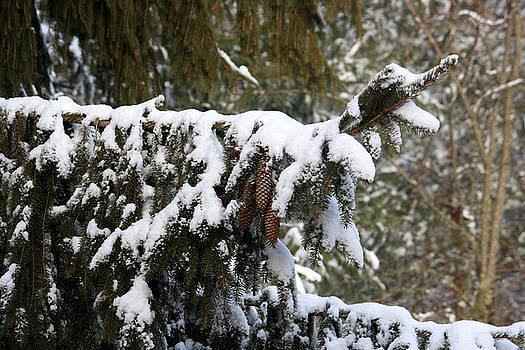 Anne Babineau - snow day