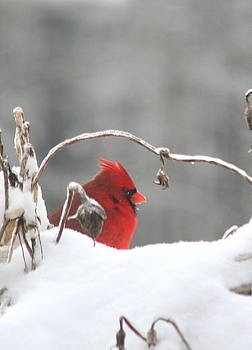 Diane Merkle - Snow Day II