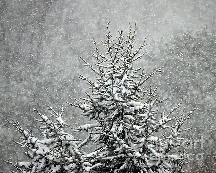 Snow Day by Kerri Farley