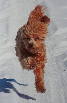 Snow Dog by Diane Merkle
