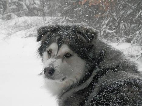Snow Dog by Heather Sylvia