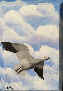 Snow Goose by Rich Fotia