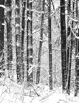 Snow In A Forest by Phil Perkins