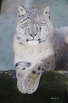 Snow leopard by Jean Yves Crispo