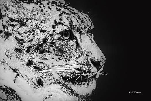 Snow Leopard by Jeff Swanson