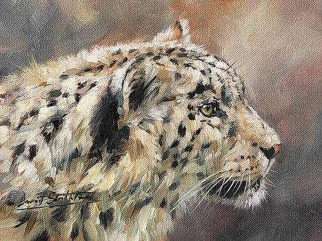 Snow Leopard Study by David Stribbling
