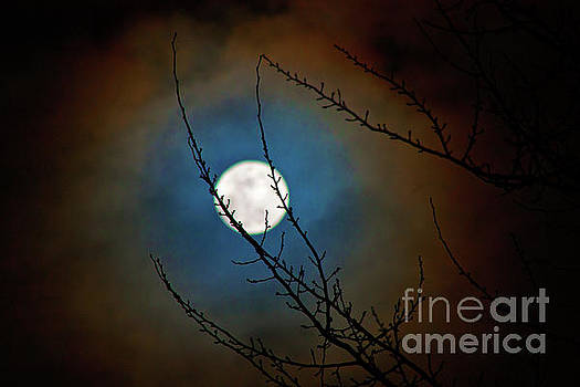 Snow Moon 3 by Janie Johnson