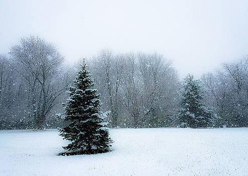 Snow on the Trees by Dan McCafferty