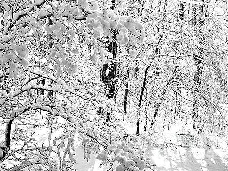 Snow Scene in Black and White by JW Hanley