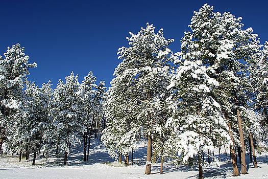 Snow Scene In South Dakota by David Hintz