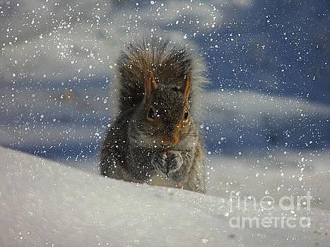 Snow Squirrel by Mim White