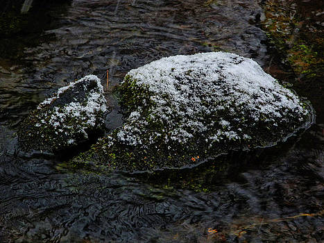 Snow Strikes the Moss by Raymond Salani III