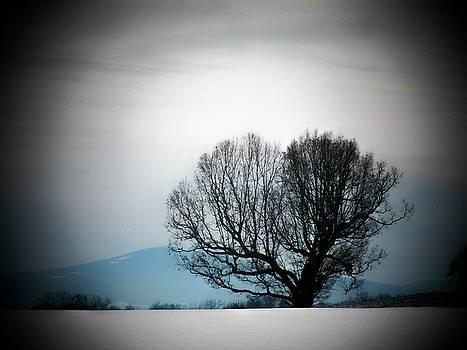 Snow Tree by Joyce Kimble Smith
