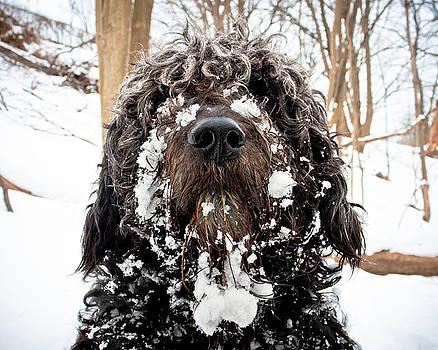 Snowbeast No 1 by Brian Carson