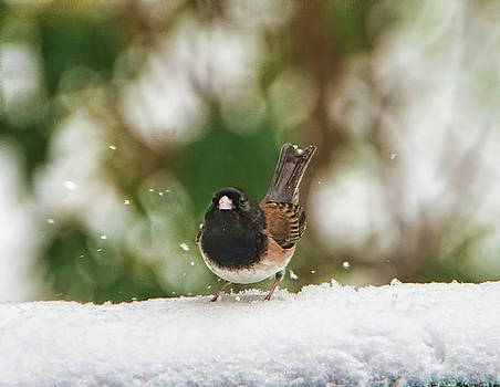 Snowbird by Marilyn Wilson