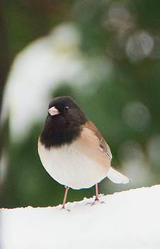 Snowbird 2 by Marilyn Wilson