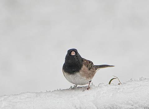 Saucy Sparrow by Marilyn Wilson