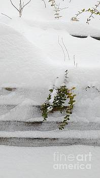 Snowfall by Anita Adams