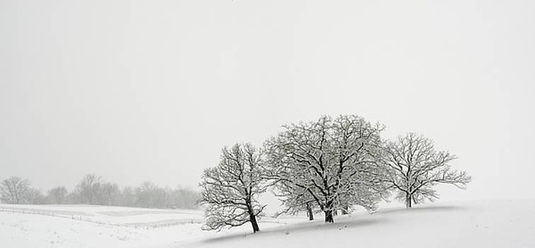 Snowfall Jo Davies County Illinois by Steve Gadomski