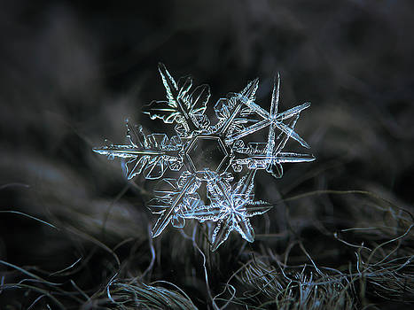 Snowflake of 19 March 2013 by Alexey Kljatov