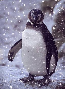 SnowPenguin by Chris Boulton