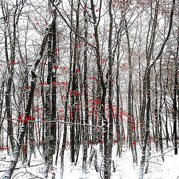 Snowstorm by Vera Laake