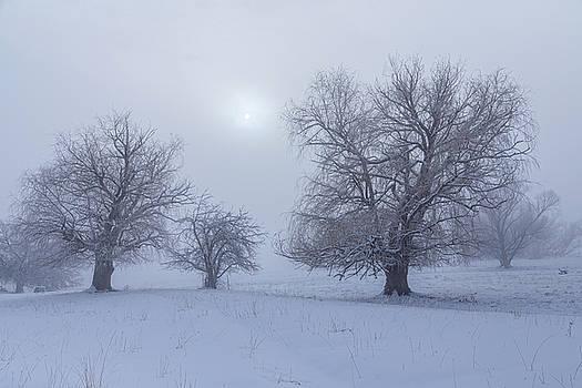Snowy Foggy Sun Burning by James BO Insogna
