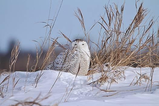 Snowy Knoll by Teresa McGill