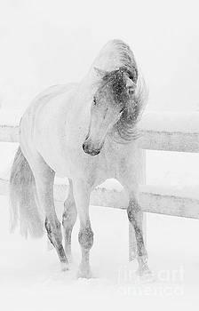Snowy Mare Shakes Her Head by Carol Walker