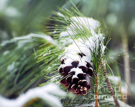 Snowy Pine Cone by Kerri Farley