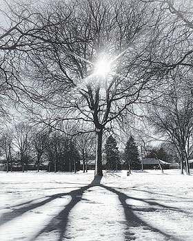 Snowy Shadows by Nikki McInnes