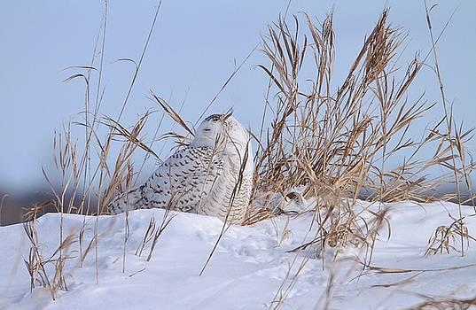Snowy Snub by Teresa McGill