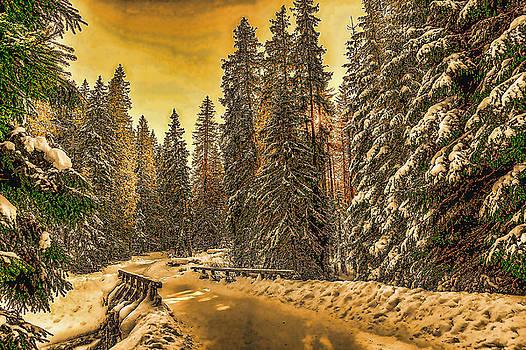 Snowy Winter Evening by Ericamaxine Price