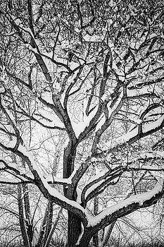 James BO Insogna - Snowy Winter Intertwine