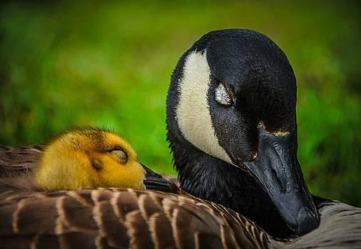 Snuggle by Abbie Loyd Kern