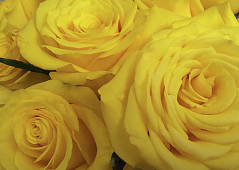 Snuggling Yellow Roses by Sarah Vernon