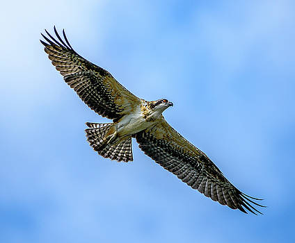 Soaring High by Jerry Cahill