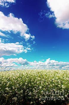Sodbuster Radish Field - Oregon by Janie Johnson