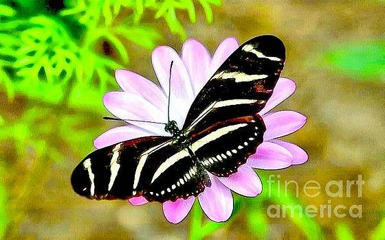 Soft And Wet BWR Butterfly  by Catherine Lott