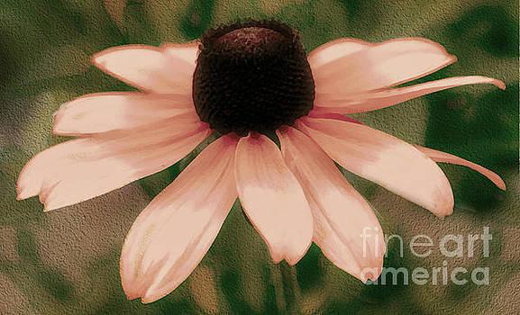 Soft Delicate Pink Daisy by Judy Palkimas