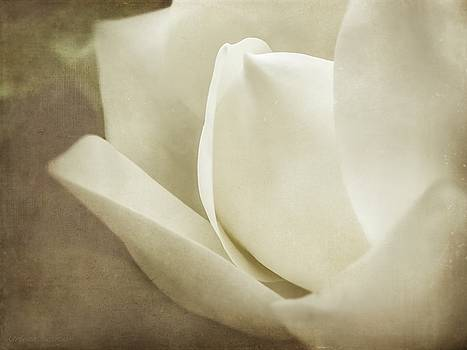 Soft Dreamy Magnolia Bloom Sepia by Melissa Bittinger