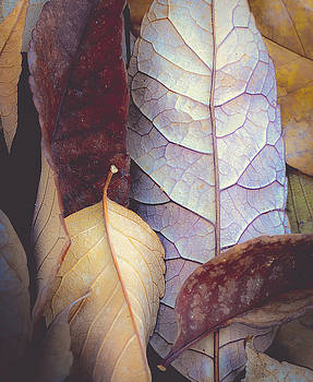 Soft Fallen Leaves by The Forests Edge Photography - Diane Sandoval