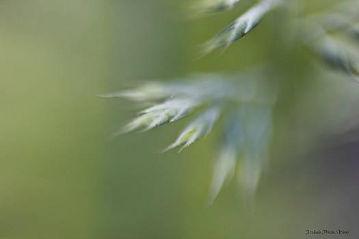 Soft Green by Michaela Preston