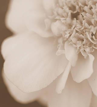 Soft Petals by Christine Ricker Brandt