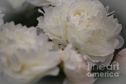 Soft Petals by Veronica Batterson