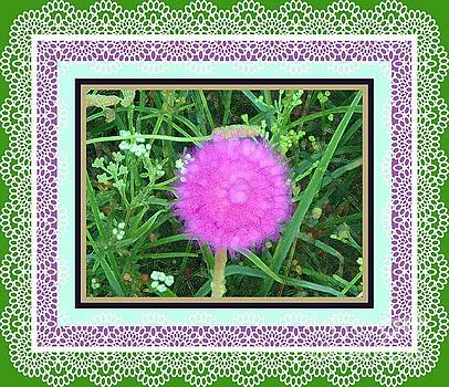 Soft Pink Thistle by Shirley Moravec