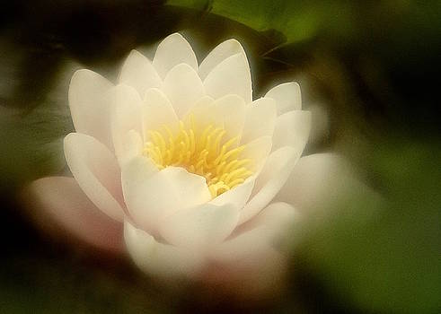 Soft Water Lily by Richard Cummings