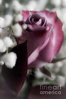 Softer Side of Love by Deborah Klubertanz